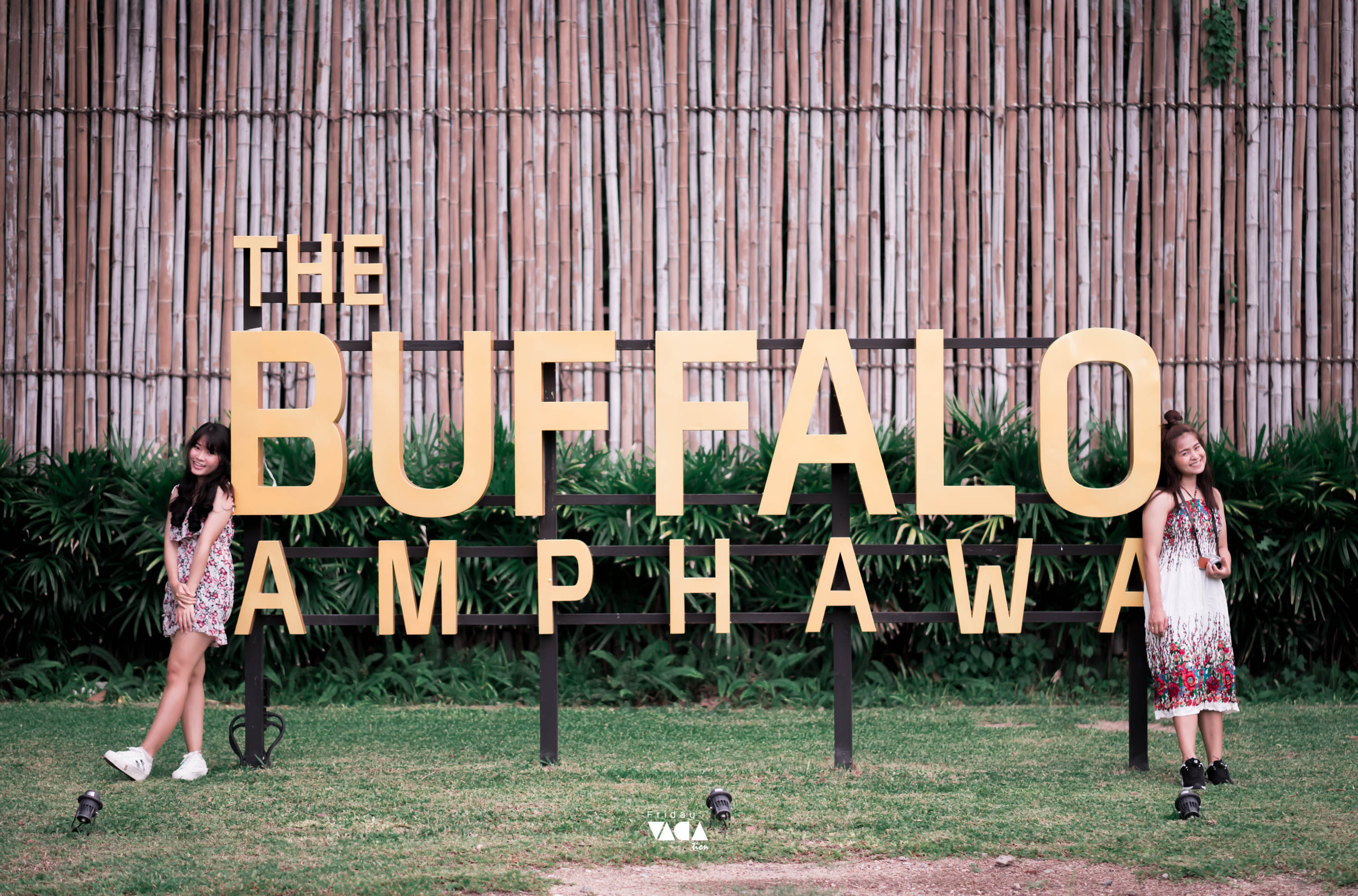 The buffalo Amphawa ที่พักอัมพวาเปิดใหม่ นครศรีดีย์